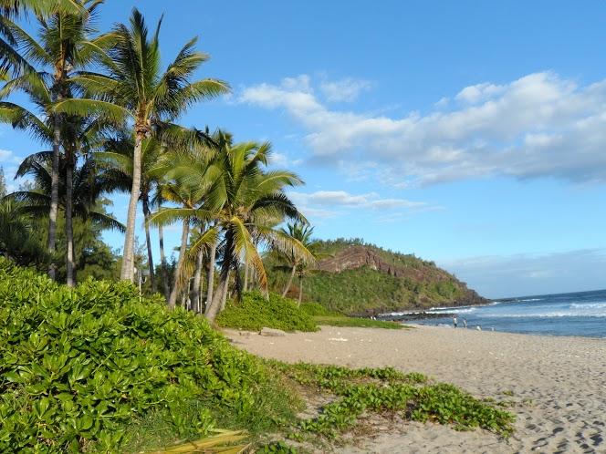 reunion plage palmier