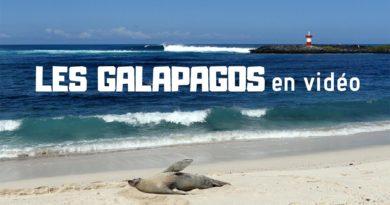 Galapagos surf trip